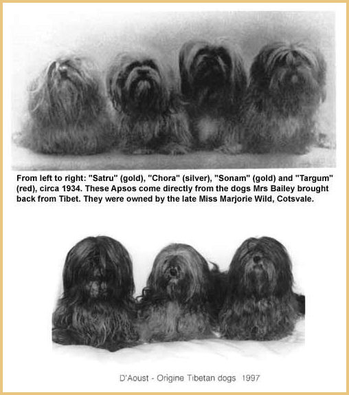 Bailey´s dogs 1934-the D' Aoust dogs type 1997